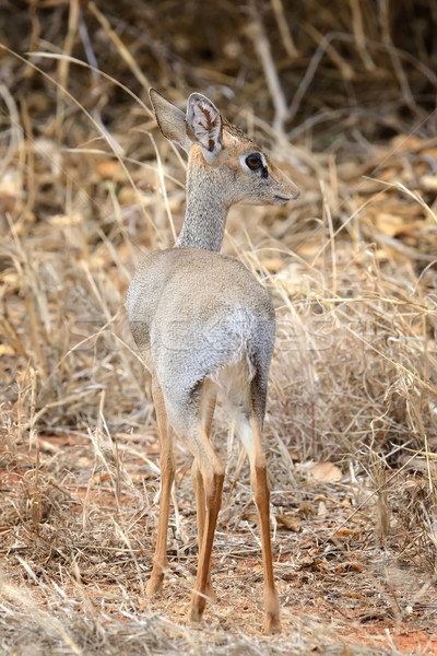 Rezerva Africa Kenia verde viaţă parc Imagine de stoc © byrdyak