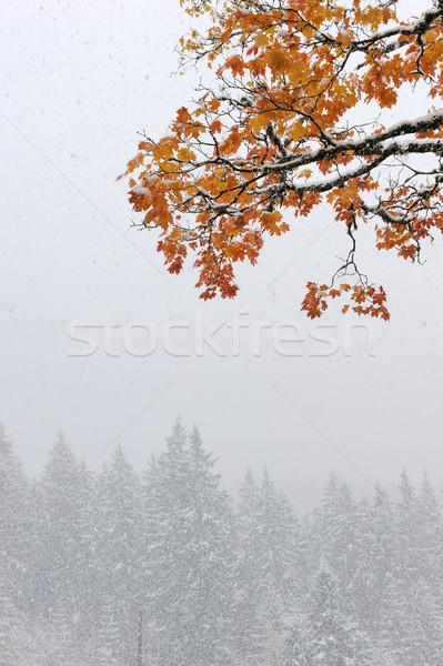 Stock fotó: Első · hó · erdő · hegyek · fű · fa