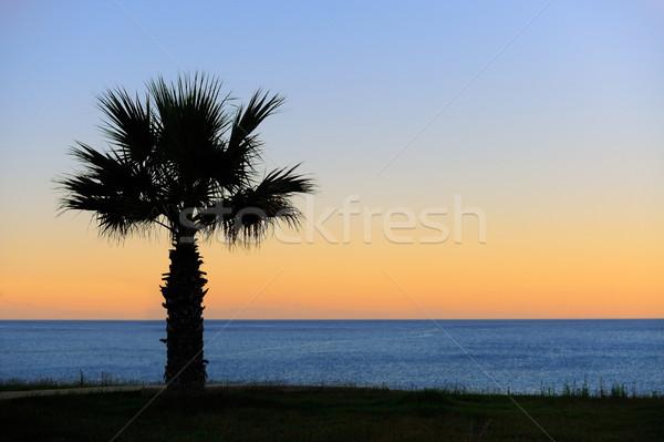 пальмами закат Blue Sky подсветка аннотация Сток-фото © byrdyak