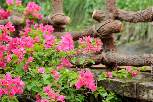 Rosa flores Sri Lanka flor resumen diseno Foto stock © byrdyak
