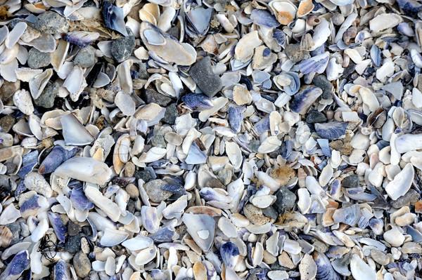 Conchas diferente juntos sólido praia água Foto stock © byrdyak
