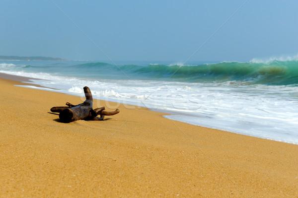Stok fotoğraf: şube · dalgalar · tropikal · plaj · büyük · gökyüzü · ağaç