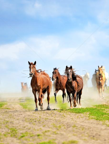 Horses Stock photo © byrdyak