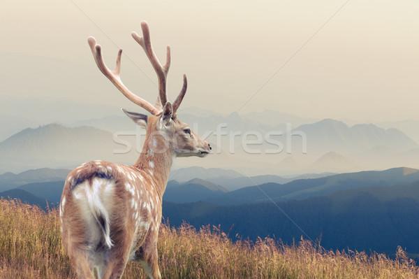 Geyik ayakta sonbahar dağ çim doğa Stok fotoğraf © byrdyak