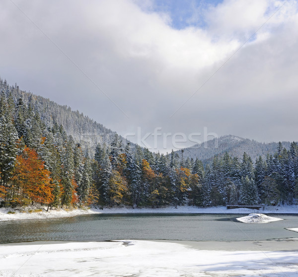 Mountain forest with first winter snow Stock photo © byrdyak