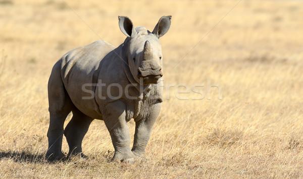 Rhino Stock photo © byrdyak