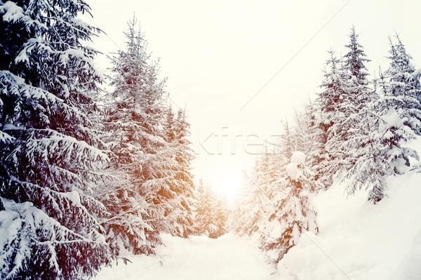 Stok fotoğraf: Kış · manzara · güzel · kar · kapalı · ağaçlar