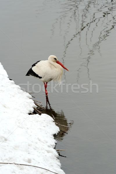 Gólya gyönyörű park kint természet szépség Stock fotó © byrdyak