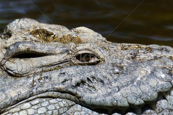 Grup crocodil râu parc Africa apă Imagine de stoc © byrdyak