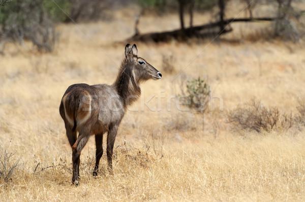 リザーブ アフリカ ケニア 自然 光 葉 ストックフォト © byrdyak