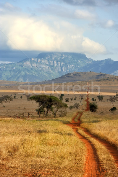 Red ground road and bush with savanna landscape in Africa Stock photo © byrdyak