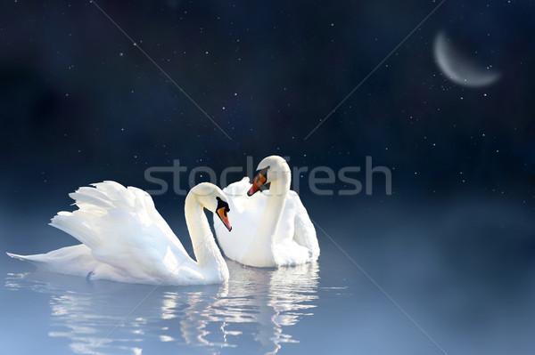 Pareja cisne amor noche lago puesta de sol Foto stock © byrdyak