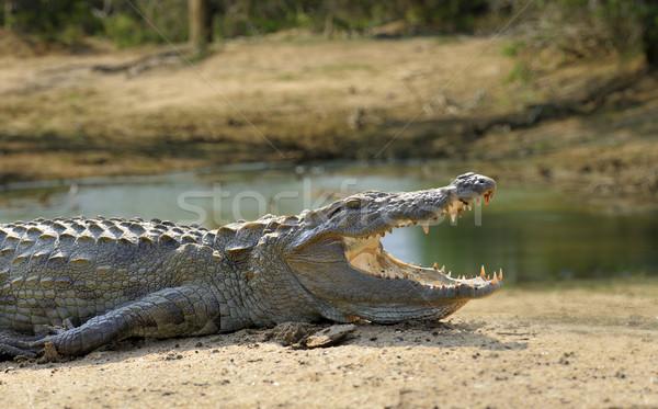 Cocodrilo grande parque Sri Lanka agua lago Foto stock © byrdyak