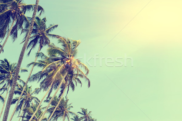 Palma cocco verde cielo blu albero sole Foto d'archivio © byrdyak
