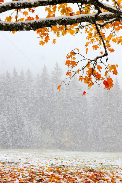 First snow in the forest in the mountains Stock photo © byrdyak