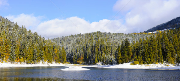 первый снега лес гор дерево древесины Сток-фото © byrdyak