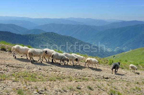 Birka legelő hegyek nyár tájkép tavasz Stock fotó © byrdyak