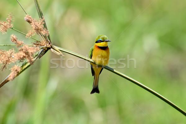 çiçek avrupa açık çift güzellik kuş Stok fotoğraf © byrdyak