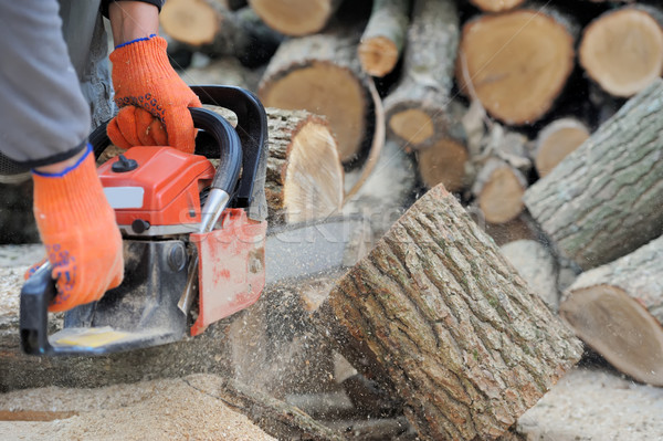 Stock photo:  Chainsaw and tree