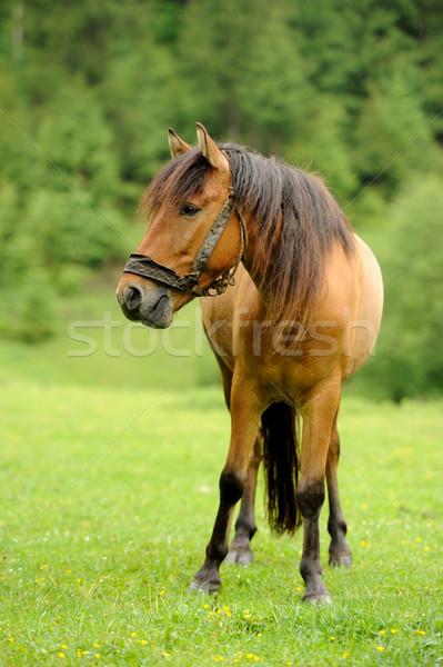 Caballo pradera arena granja tormenta velocidad Foto stock © byrdyak