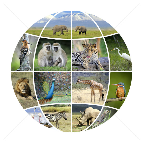 Globe design with photographs animals Stock photo © byrdyak