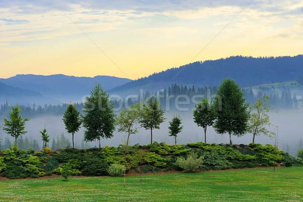Puslu ağaç dağ doğa rezerv Stok fotoğraf © byrdyak