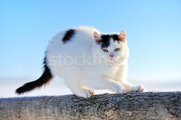 Gato gatinho ramo inverno cara amor Foto stock © byrdyak