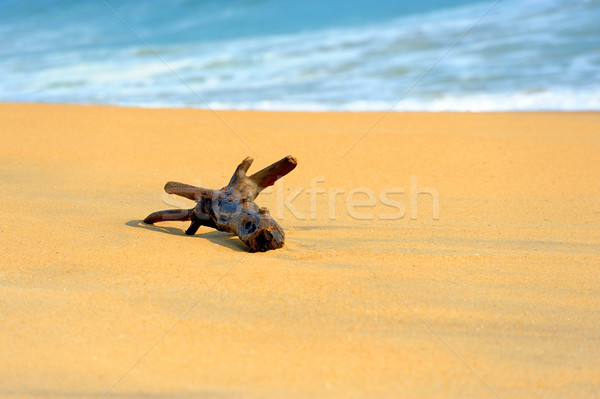 Branch is washed by waves on a tropical beach Stock photo © byrdyak