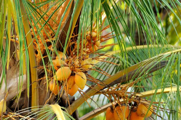 Cocotier arbre plage Sri Lanka île alimentaire Photo stock © byrdyak
