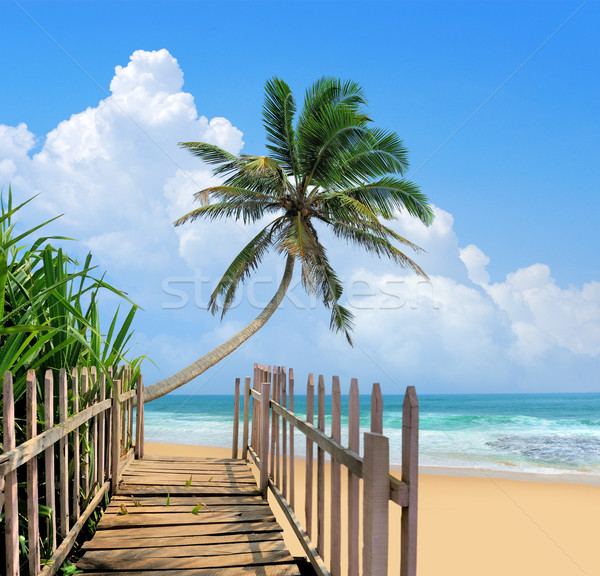 Wooden platform beside tropical beach Stock photo © byrdyak