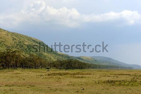 サバンナ 風景 公園 ケニア アフリカ 空 ストックフォト © byrdyak