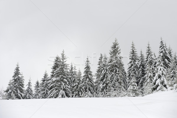 Beautiful winter landscape Stock photo © byrdyak