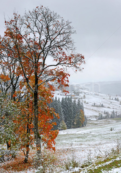 первый осень снега дома дерево пейзаж Сток-фото © byrdyak