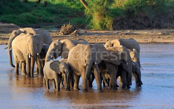Stok fotoğraf: Fil · rezerv · Afrika · Kenya · gökyüzü · doğa