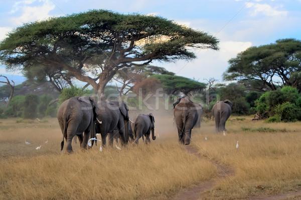 Elefánt tartalék Afrika Kenya család sétál Stock fotó © byrdyak