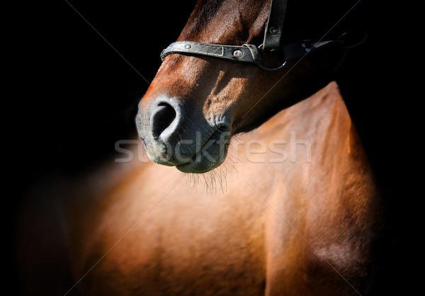 Ló közelkép gyönyörű fej izolált fekete Stock fotó © byrdyak