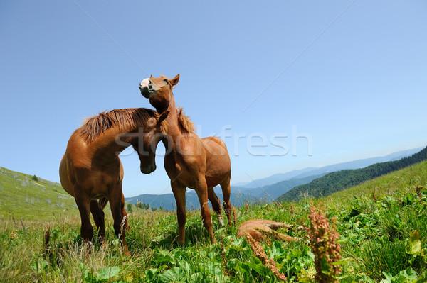 2 馬 山 馬 緑 草原 ストックフォト © byrdyak