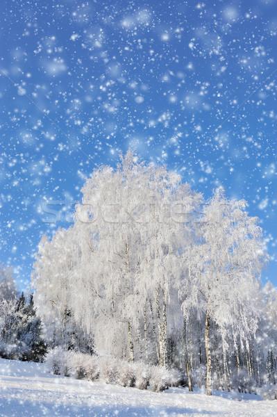 зима парка снега лес природы Сток-фото © byrdyak