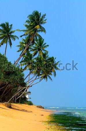 Spiaggia tropicale Palm Sri Lanka spiaggia cielo acqua Foto d'archivio © byrdyak