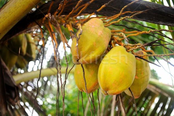 Kókuszpálma fa tengerpart étel kert háttér Stock fotó © byrdyak