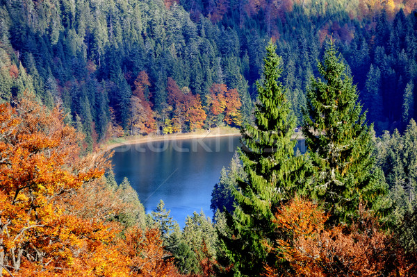 Forest lake in fall Stock photo © byrdyak