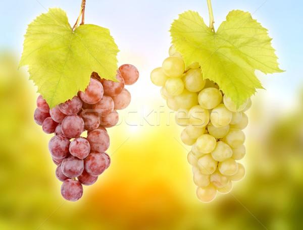 Fresh green grapes Stock photo © byrdyak