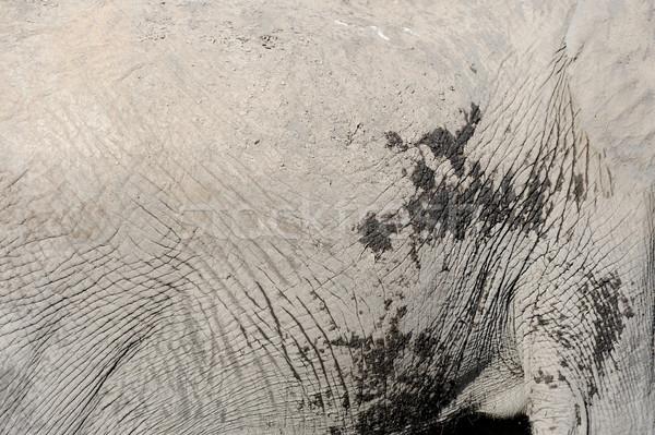 Image of elephant skin Stock photo © byrdyak