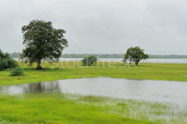 Wetlands of National Park Yala on Sri Lanka Stock photo © byrdyak