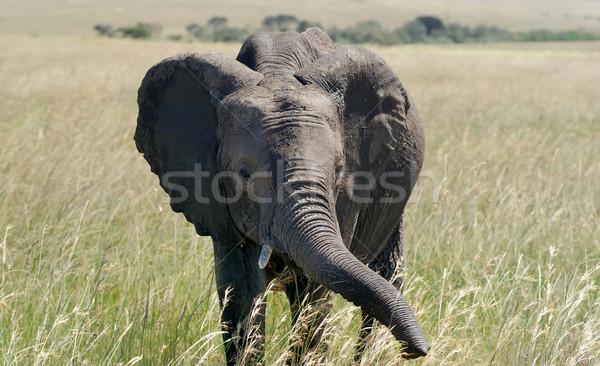 Fil park Kenya aile bebek Stok fotoğraf © byrdyak