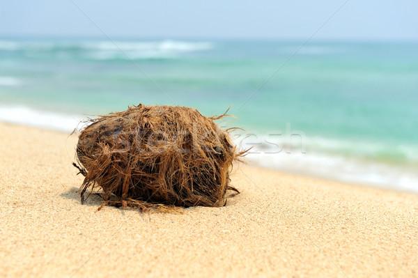 Stock photo: Coconut on tropical beach