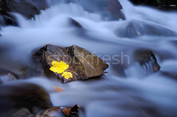 Zdjęcia stock: Liści · mokro · bazalt · kamień · jesienią