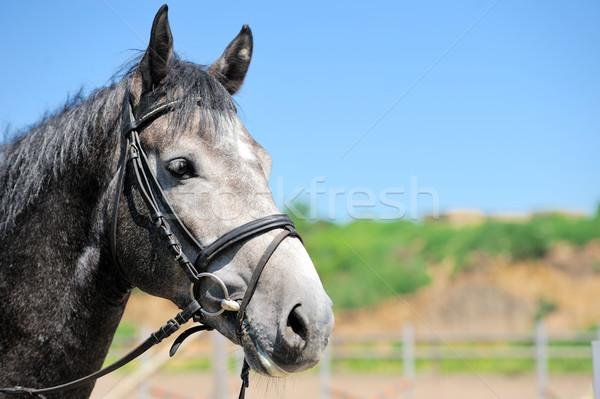 At portre göz yüz çim yaz Stok fotoğraf © byrdyak
