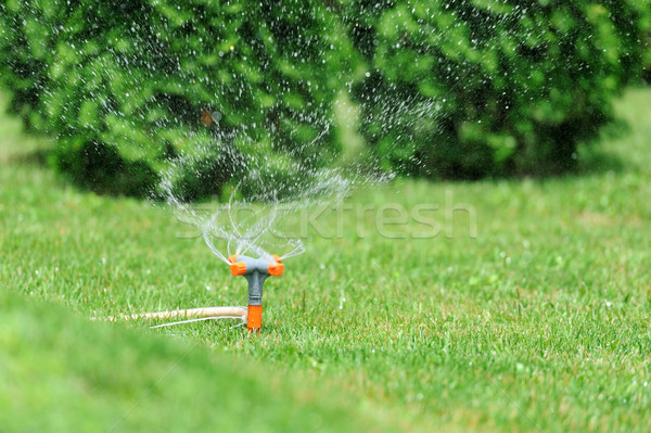 Sprinkler watering grass Stock photo © byrdyak
