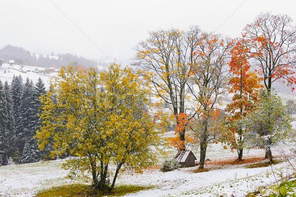 Ilk kar orman dağlar ağaç ahşap Stok fotoğraf © byrdyak